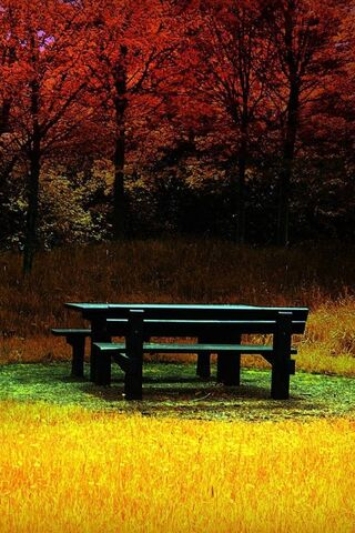शरद ऋतु महसूस