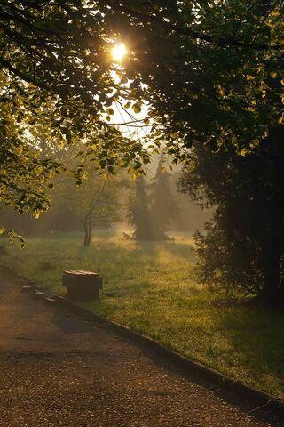 Cicha przyroda