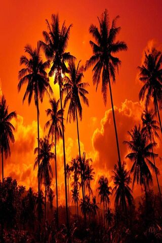 Palm Trees Nature