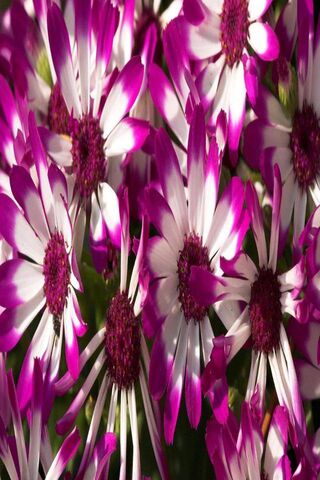 Beautiful Purple Flw