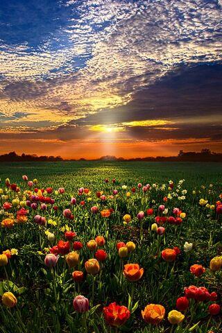 Naturaleza de primavera