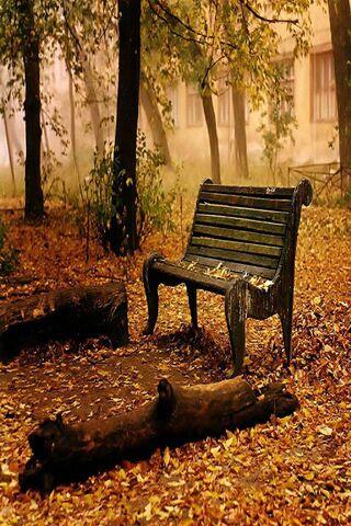 Cool Autumn Nature