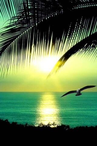 Playa Tropical Hd