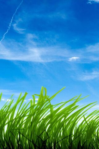Cielo azul hierba verde