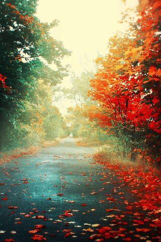 शरद ऋतु में सड़क