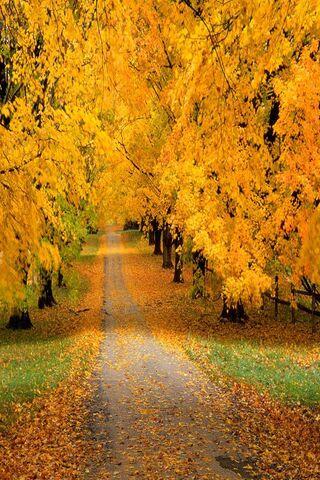 शरद ऋतु कवर रोड