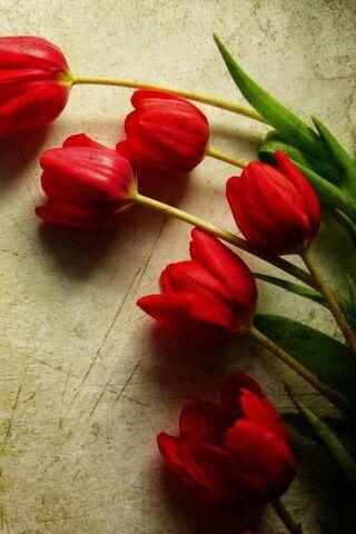 लाल फुले