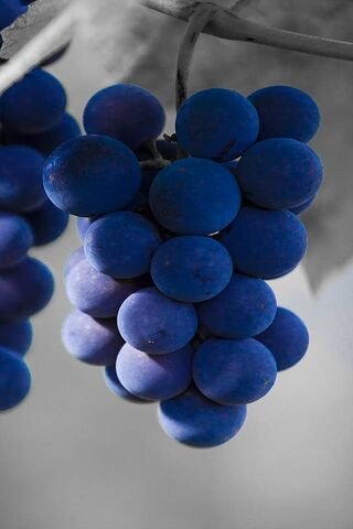 Blue Grapes