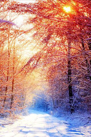 Soleado invierno mañana