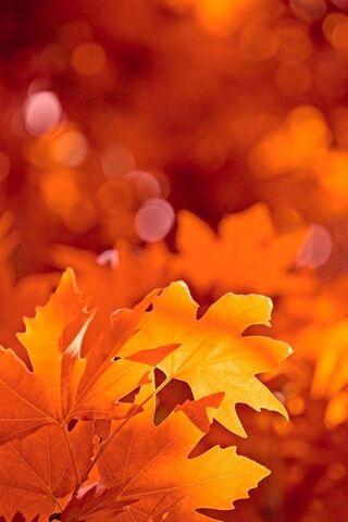 foto de Feuillage d'automne Fond d'écran - Télécharger sur votre mobile ...