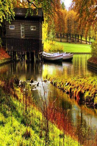 Autumn Tress Nature