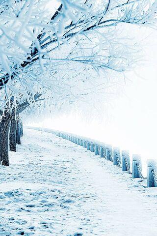 مسار الشتاء