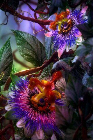Magic-Flowers-