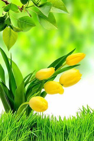Mùa xuân xanh