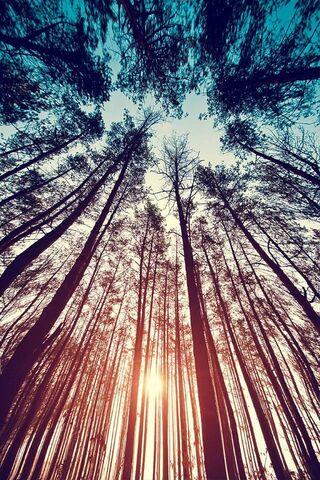 Pokok Alam