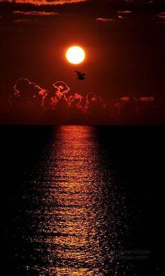 Magnifique Lever De Soleil Fond D Ecran Telecharger Sur Votre Mobile Depuis Phoneky