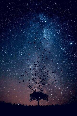 Phoneky سماء النجوم Hd خلفيات