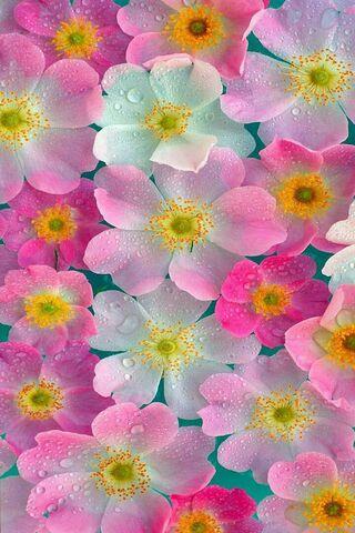 Pink Neon Flowers