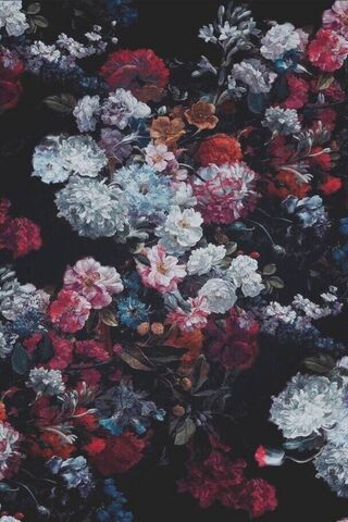 Warna Rose