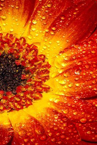 붉은 꽃 매크로