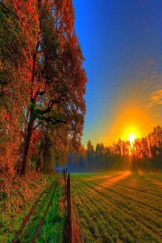 Autumn Sunset Nature