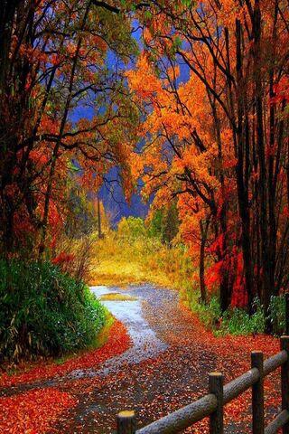 غابة الخريف