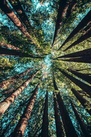 वो पेड़