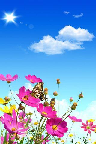 Lovely Flowers Hd