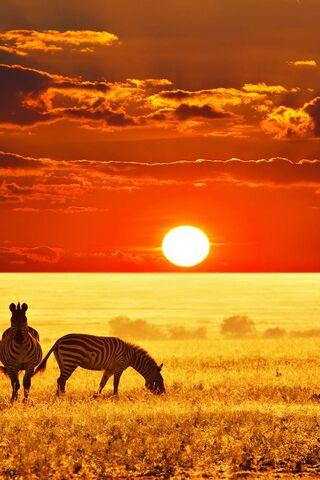 Savane Africaine Fond D Ecran Telecharger Sur Votre Mobile Depuis Phoneky