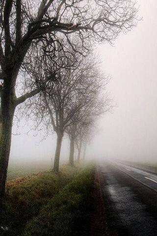 Nature N Road