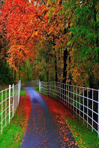 शरद ऋतु की सड़क