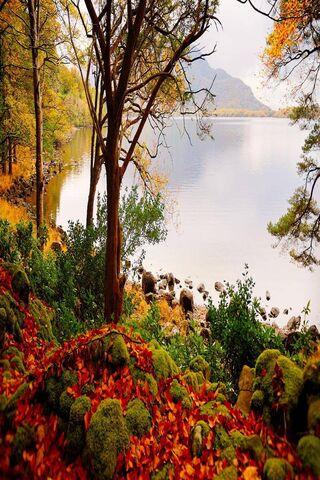 शरद ऋतु के पेड़
