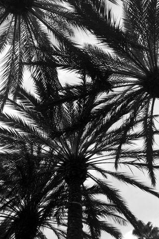 Pokok Hitam Dan Putih Wallpaper Muat