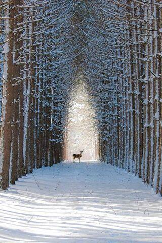 Caminho dos cervos