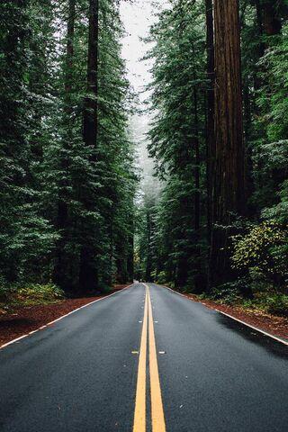 Camino y árboles
