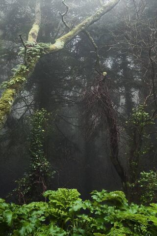 खौफनाक जंगल