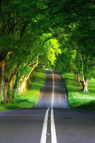 道路高清尼斯自然