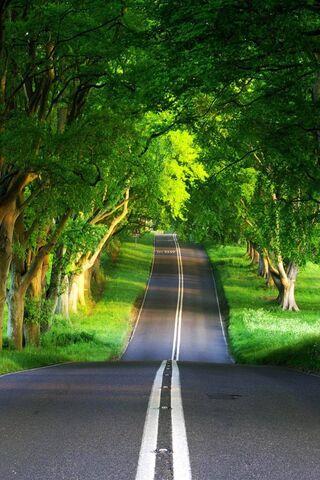 Straße Hd Nette Natur