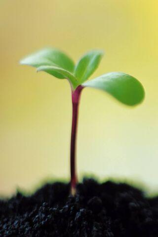Plant Bud