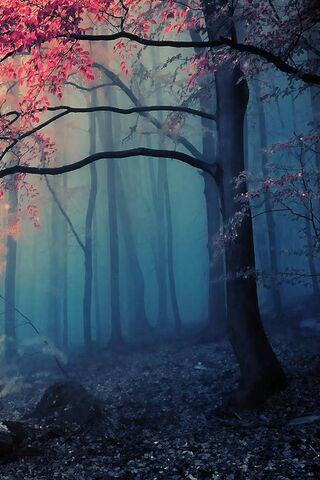 Gespenstischer Wald Hintergrund Lade Auf Dein Handy Von Phoneky Herunter