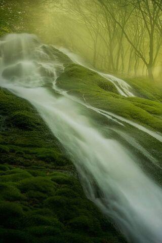 मंत्रमुग्ध वन
