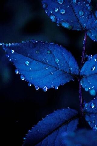 Blaues Blatt