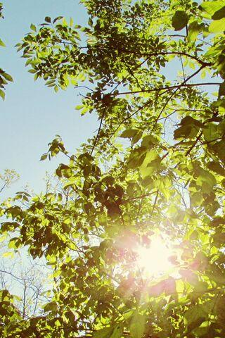 सूर्य की रोशनी