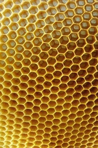 Hive Is Stil Empty