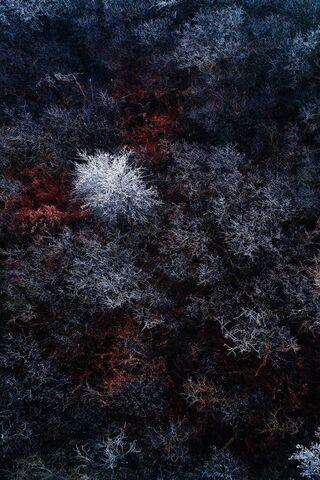 लाल हिम वन Qhd