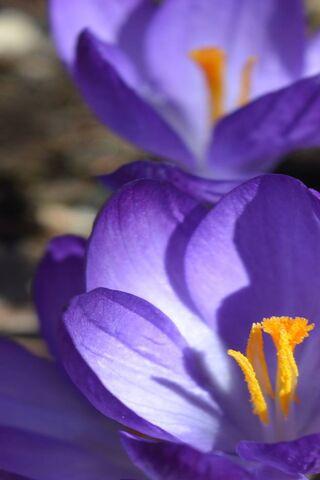 Purple Flowers 4k