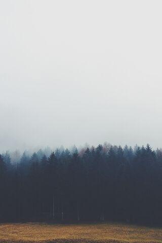 Rừng sương mù