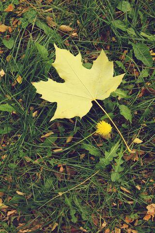 foto de Feuille d'automne iphone 5 Fond d'écran - Télécharger sur votre ...