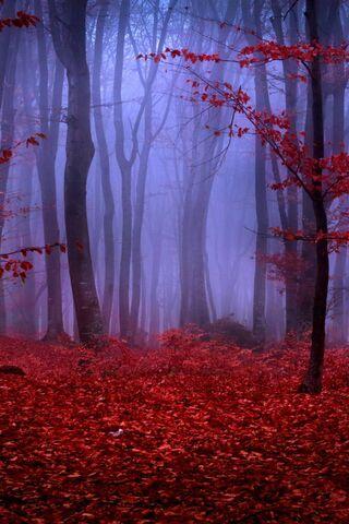 लाल वन