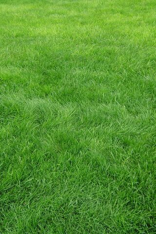 العشب HD